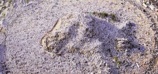 bimbingan haji sesuai sunnah nabi, KBIH Rindu Ka'bah